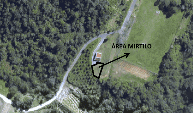 AREA MIRTILO